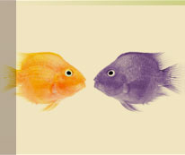 two fish look at one another