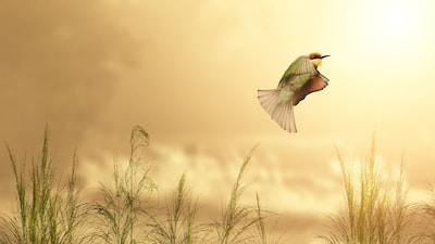 bird peacefully in flight over orange field